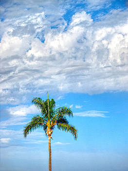 Palm With Clouds by Joe Schofield