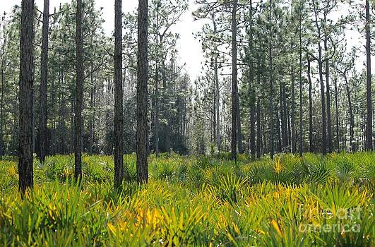 Palmettos and Pines by Theresa Willingham