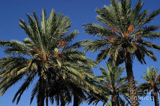 Gary Gingrich Galleries - Palms 9838B