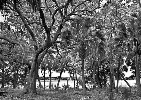 Palms and Bridge by Susan Leggett