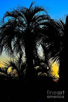Palms by Eric Grissom