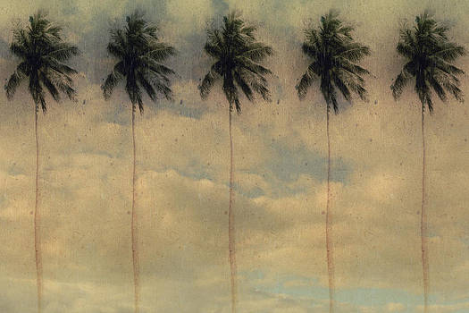 Palms by Stephen Walker