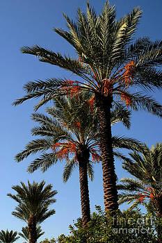 Gary Gingrich Galleries - Palms9895B