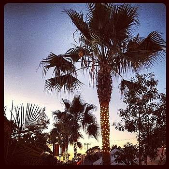 #palmtrees #oceanside by Lauren Laddusaw