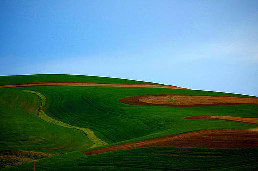 Palouse Landscape by Martha Hughes