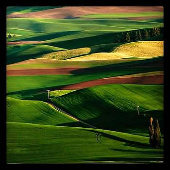 Palouse Sunset by Felice Willat