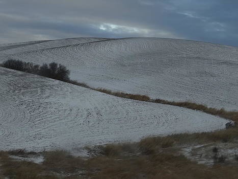 Palouse Winter 1 by Mary McInnis