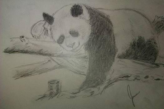 Panda by Jamie Mah