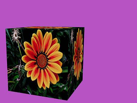 Pandora box by Jesus Nicolas Castanon