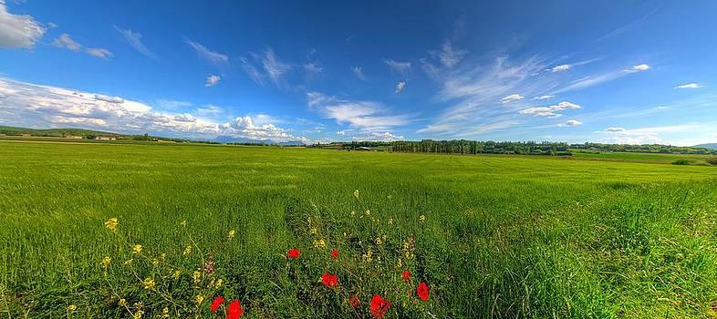 Panorama by Alexander Elzinga