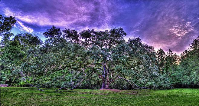 Panoramic Oak by Alex Owen