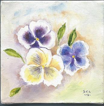 Pansy 144 by Mary Solomon