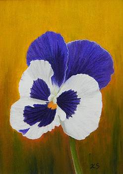 Pansy by Xenia Sease