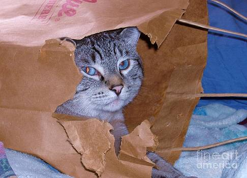 Paper bag Kitty by Donna Parlow
