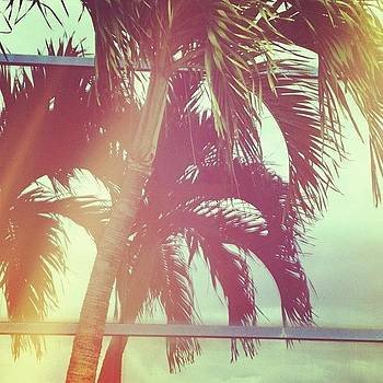 Paradise Palms by Love Bird Photo