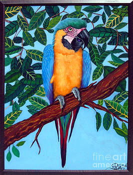 Parrot by Annette Jimerson