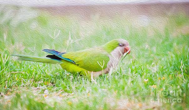Parrot Art by Steven Van Gucht