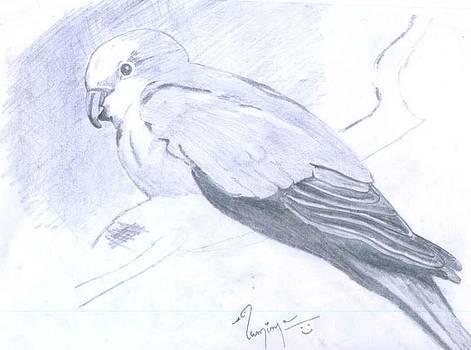 Parrot by Poornima M