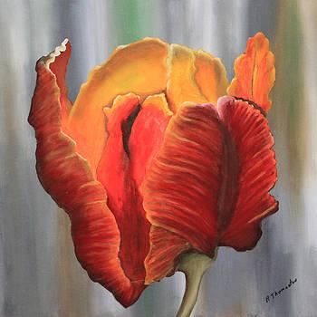 Parrot Tulip by Robert Thomaston