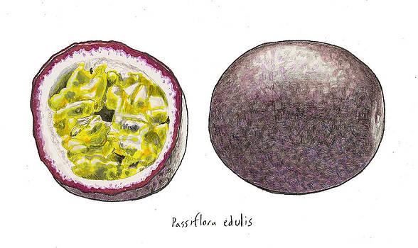 Steve Asbell - Passiflora Edulis Fruit