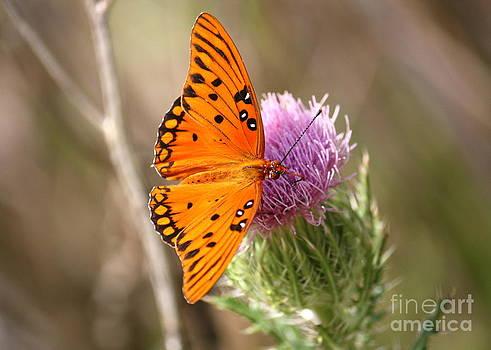 Danielle Groenen - Passion Butterfly