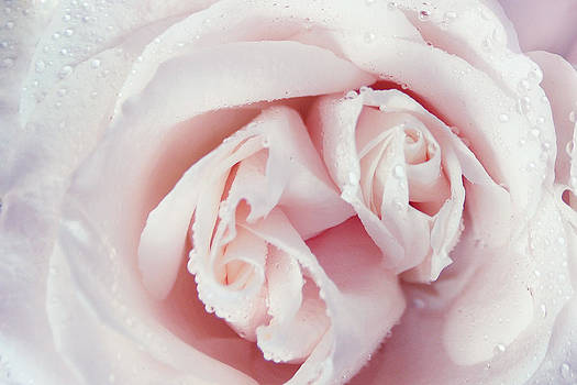 Jenny Rainbow - Passion for Flowers. One Rose Two Hearts