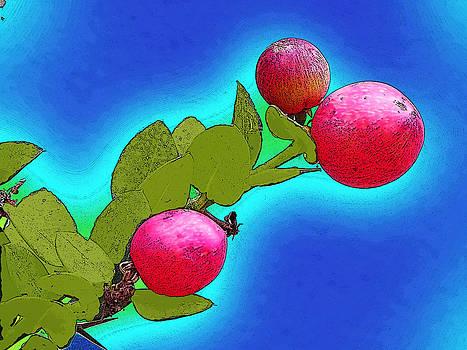 Passion fruit by Jesus Nicolas Castanon