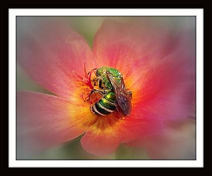 Passion in Nature by Evelyn F Kramer