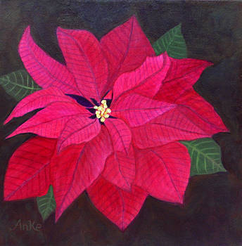 Passion Poinsettia by Anke Wheeler