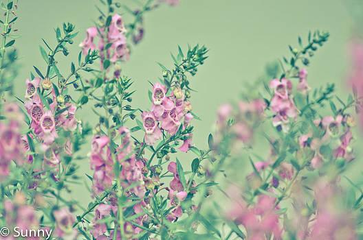 Pastel in my garden by Kornrawiee Miu Miu