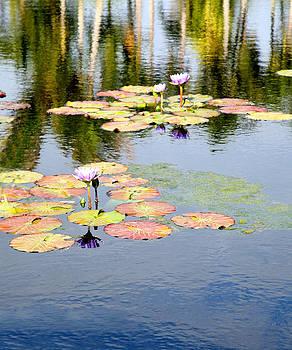 Pastel Lilies by Carol Kinkead