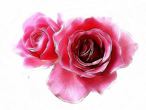 Steve K - Pastel Roses