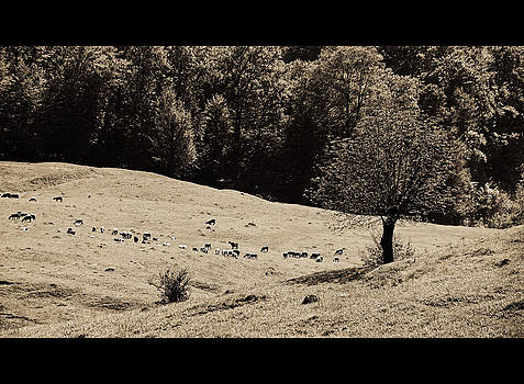 Pastoral Landscape by Bogdan M Nicolae