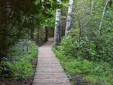 Path by Karolina Olszewska
