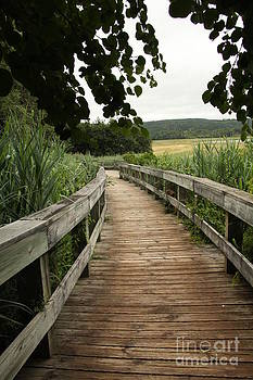 Paths by Diane Greco-Lesser