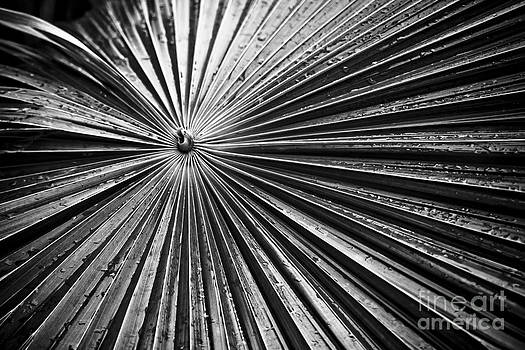 Darcy Michaelchuk - Patterns in the Leaf BW