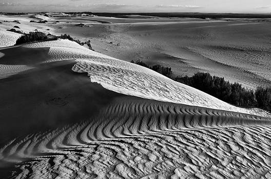 Patterns Of The Desert by Heather Thorning
