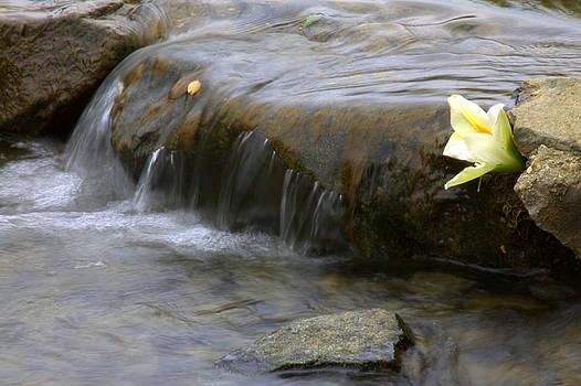 Peace by Rick Mutaw