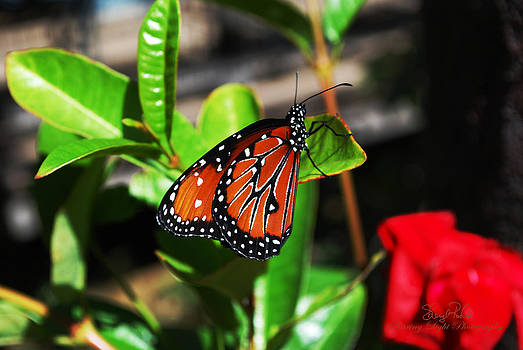 Peaceful Butterfly by Sheryl Cox