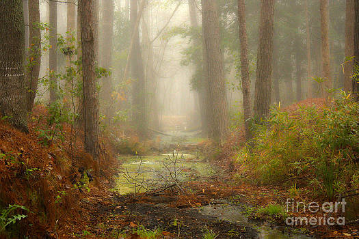 Peaceful Pathway by Jill Smith
