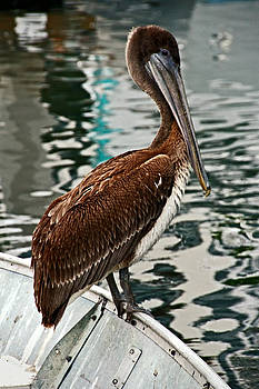 Peaceful Pelican Place by Donna Pagakis