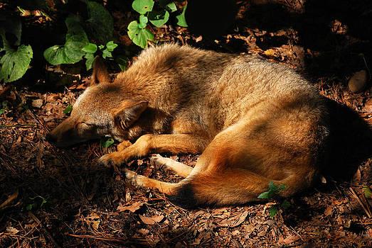 Peaceful Slumber by Lori Tambakis