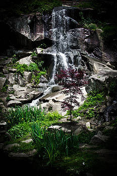 Peaceful Waterfall by Swift Family