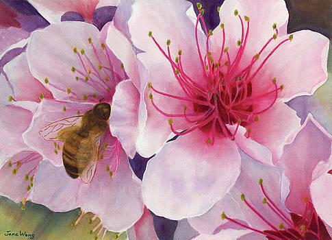 Peach-Making by Jane Wong