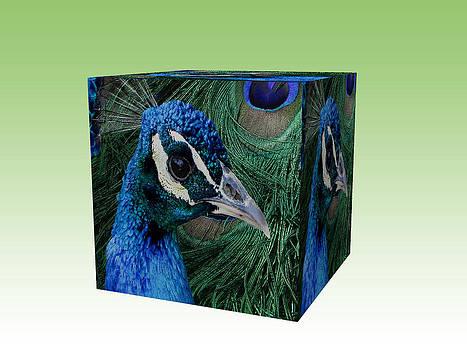 Peacock box by Jesus Nicolas Castanon