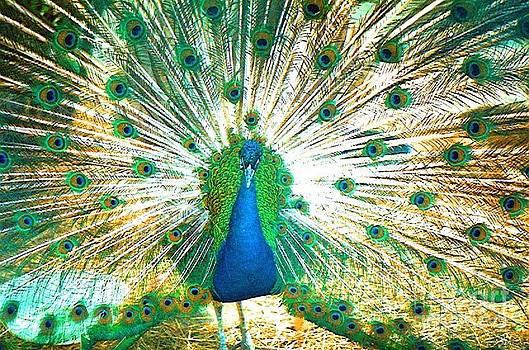Peacock by Joseph   Geswaldo