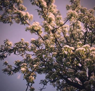 Georgia Fowler - Pear Tree
