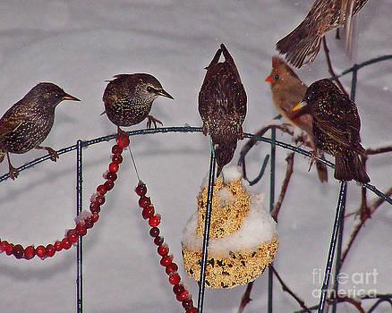 Anne Ferguson - Pecking Order