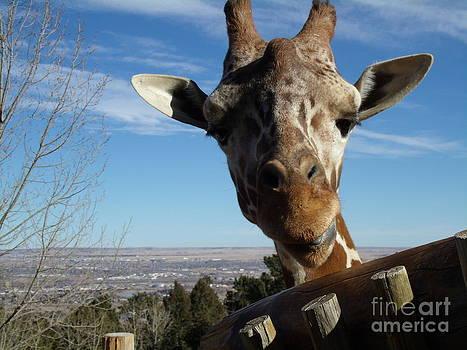 Peek-a-boo Giraffe by Donna Parlow