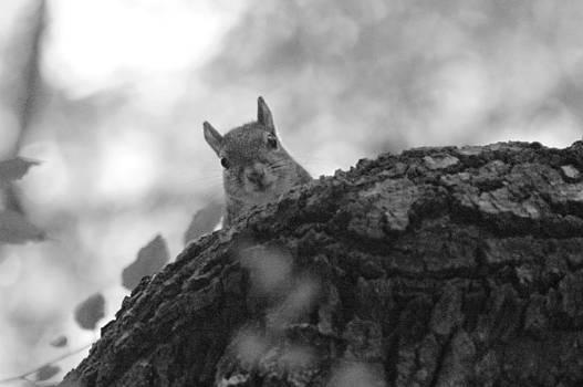 Ronald T Williams - Peekaboo Squirrel